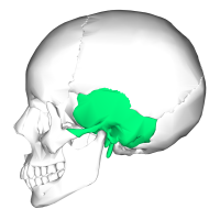 1200px-Temporal_bone_lateral5